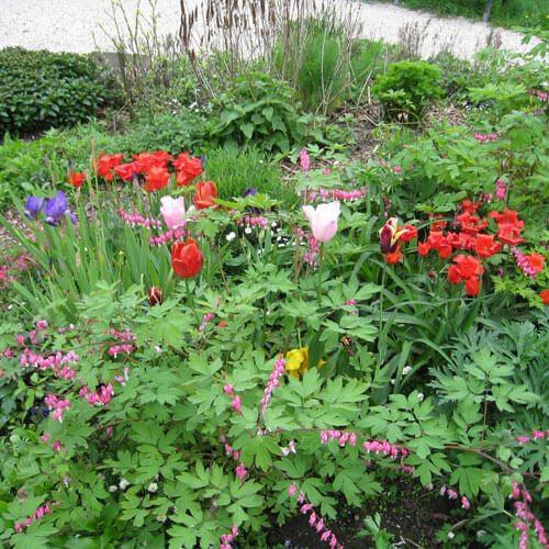 Gardener urgent